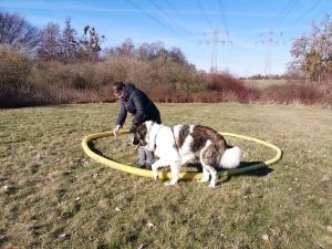 Aufbautraining Teil 1 - Hundeschule Rose in Wolfsburg