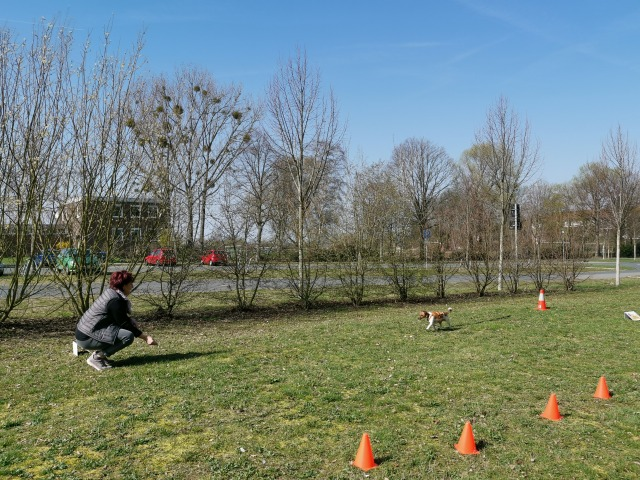 Aufbautraining Teil 2 - Hundeschule Rose in Wolfsburg