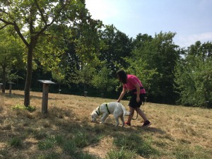 Fährtentraining - Nachgehen der Fährte - Hundeschule Rose