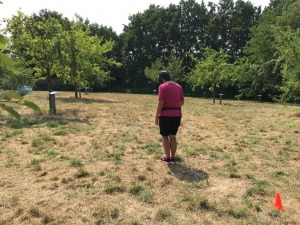 Fährtentraining - das Legen der Fährte - Hundeschule Rose