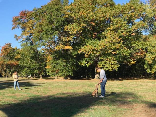 Hundeschule Rose unterstützt Sie und Ihren Hund mit Abrufübungen - für einen sicheren Spaziergang