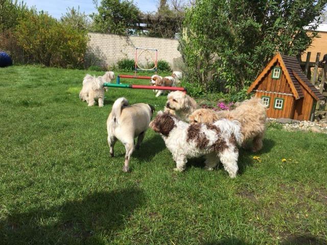 Einblick in das Minitreffen der Hundeschule Rose