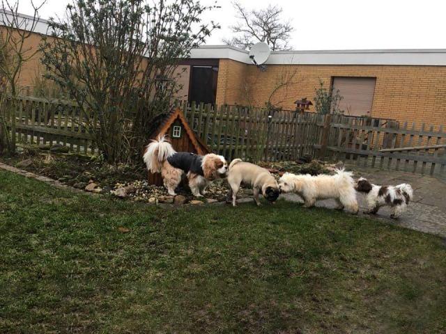 Beschnuppern beim Minitreff der Hundeschule Rose in Wolfsburg