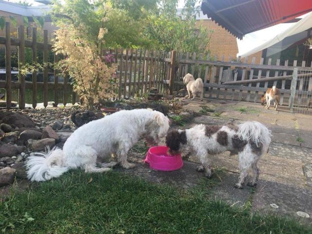 Gemeinsame Erfrischung beim Minitreff der Hundeschule Rose