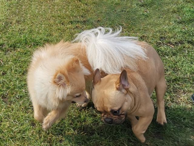 Großer Spaß beim Minitreff Hundeschule Rose