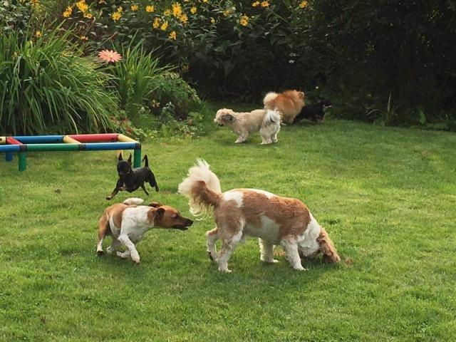 Minitreff der Hundeschule Rose - Große Freude beim Wiedersehen