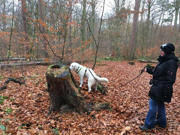 Schnüffelspaß beim Social Walk mit der Hundeschule Rose