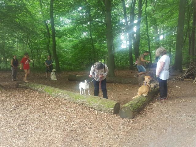 Schnüffelspaß in der Gruppe beim Social Walk der Hundesschule Rose in Wolfsburg