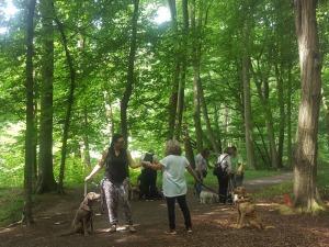 Trainingsangebot Social Walk der Hundeschule Rose in Wolfsburg