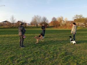 Hundeschule Rose - Minigruppe fünfer Ticket