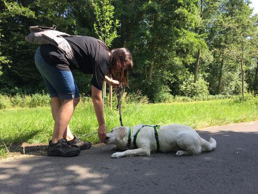 Übungen für Sitz und Platz der Hundeschule Rose in Wolfsburg
