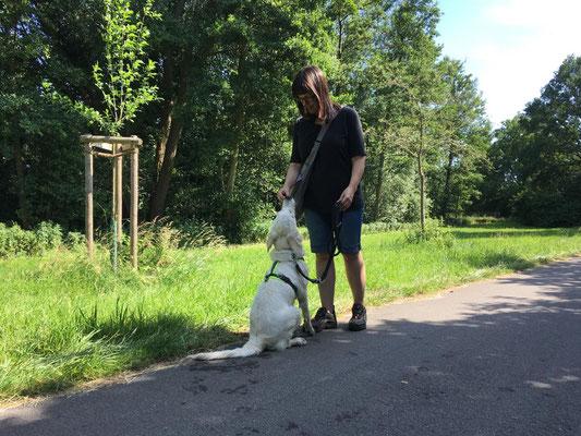 Einzeltraining mit Sitz und Platz Übungen - Hundeschule Rose in Wolfsburg