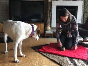 Einzeltraining der Hundeschule Rose in Wolfsburg