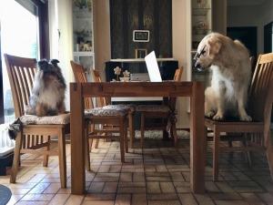 Erstgespräch der Hundeschule Rose