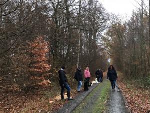 Social Walk in der Gruppe - Hundeschule Rose