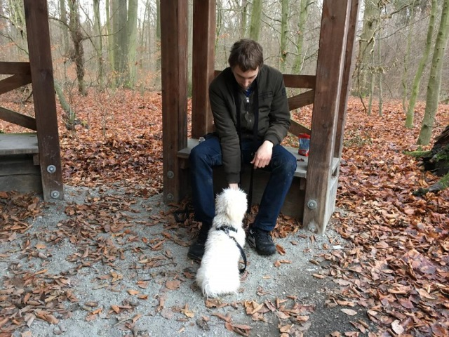 Hundetraining im Wald - Hundeschule Rose