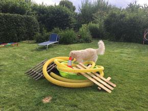 Beschäftigung und Trümmerfeldsuche - Hundeschule Rose