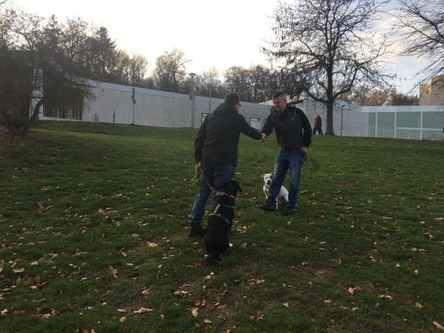 Training der Begrüßung - Hundeschule Rose
