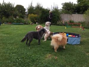 Minitreff für kleinere Hunde bei der Hundeschule Rose